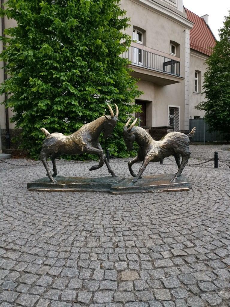 Symbol of poznan